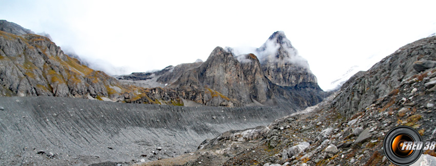 Pied glacier pramort photo3