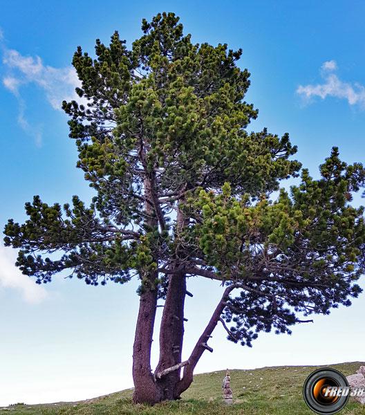 Pin a crochet arbre