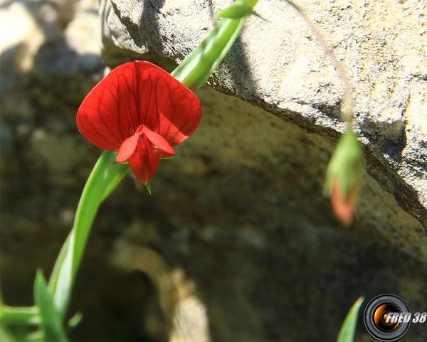 Gessette2_Haute-Provence