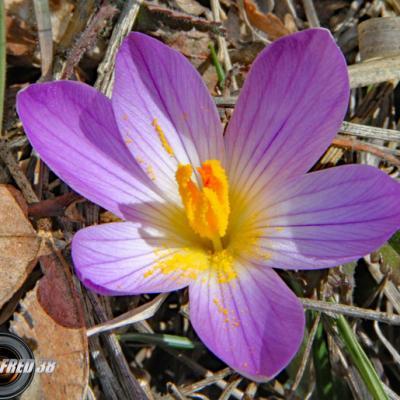 - De Parisette à Rhododendrons