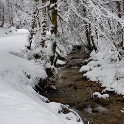 Ruisseau de l'Orme.