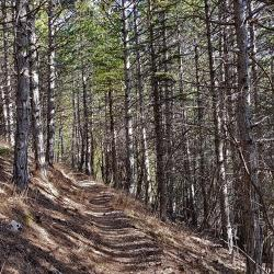 Le bon sentier de montée.