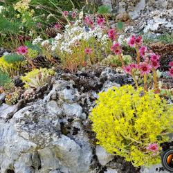 mini jardin alpestre.