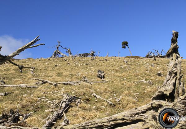 Beaucoup d'arbres morts en arrivant au sommet.