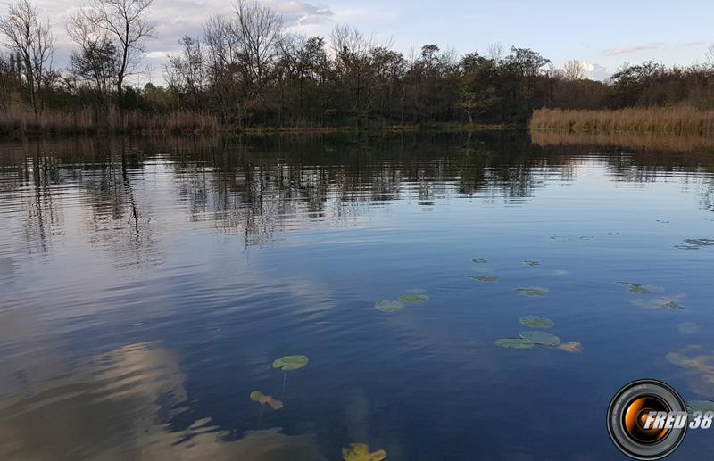 L'étang de Hieres.