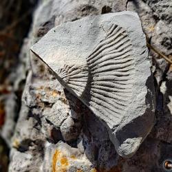 Traces de fossiles sur le chemin.